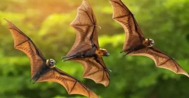 VOA Learning English - Bats and Fish Farming