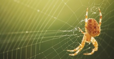 VOA Learning English - What do Spider Webs and Guitar Strings Have in Common?