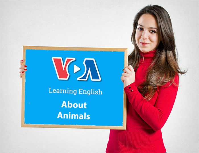 VOA Learning English About Animals for English Learners