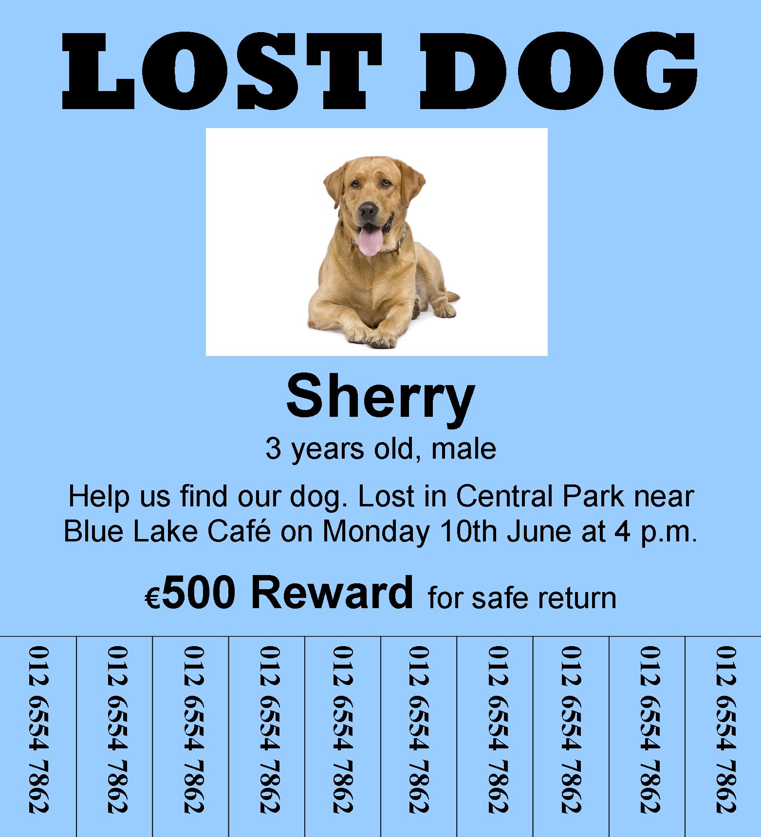 A Lost Dog Learnenglish Teens