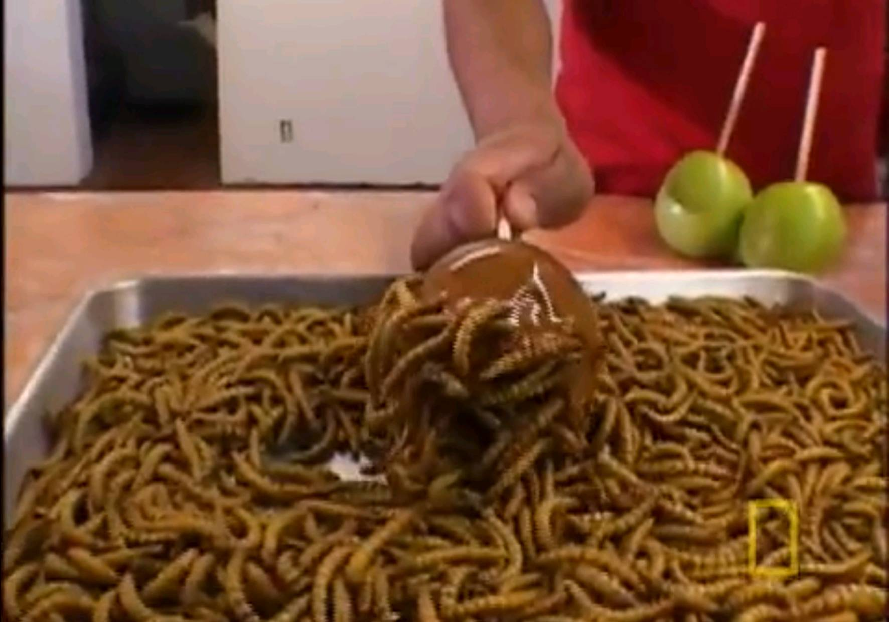 Eating Insects Learnenglish Teens