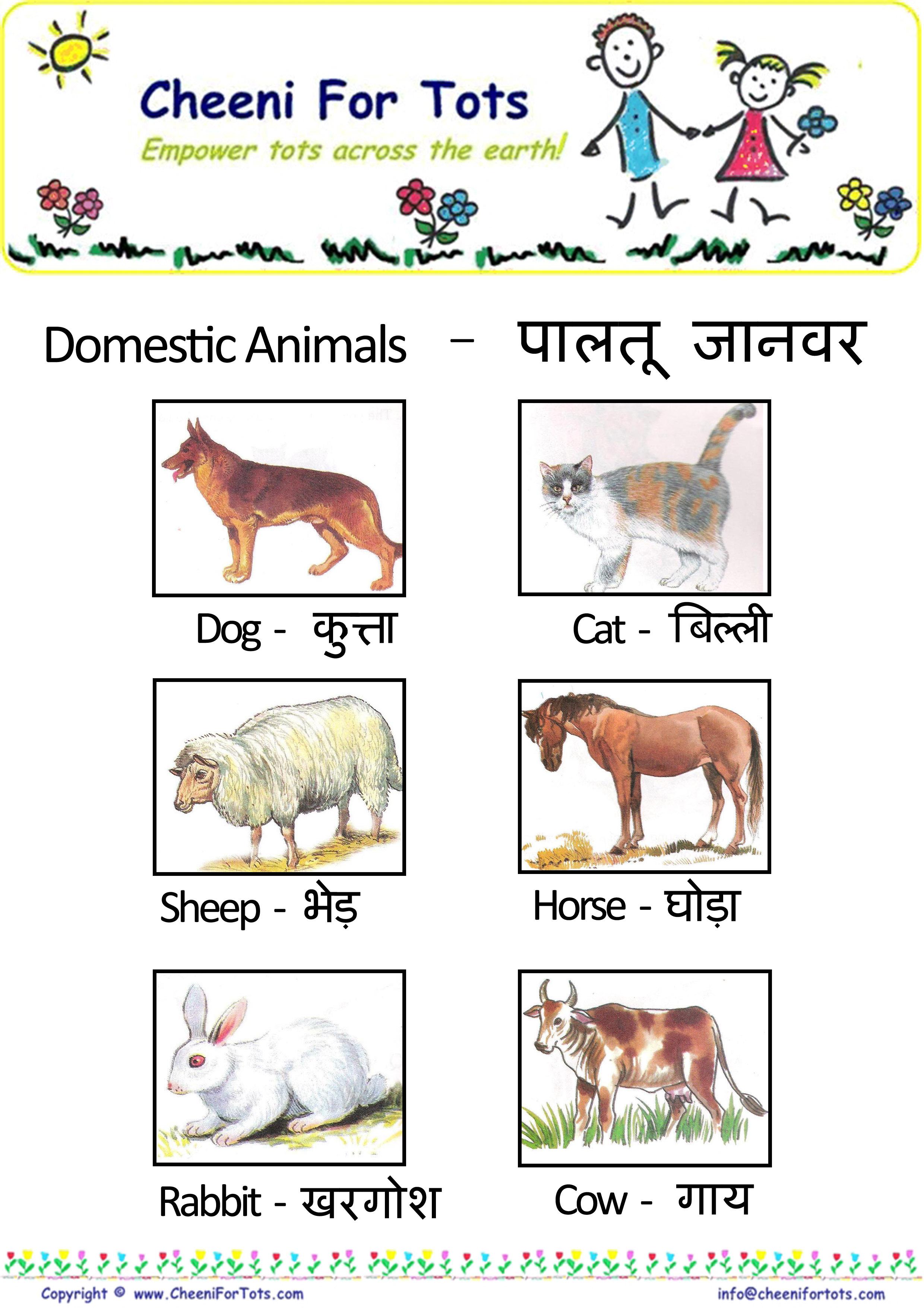 Animals Name In Hindi Learnhindionline