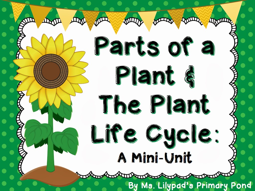 Parts Of A Plant Amp The Plant Life Cycle