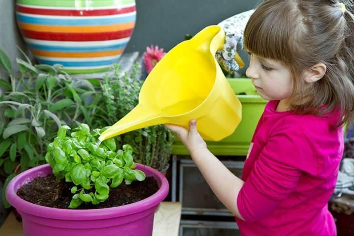 Herb Gardening with Kids