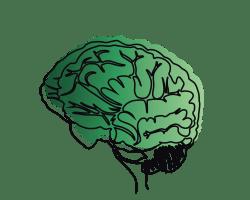 Sketch of brain.