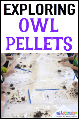 Are you looking to use owl pellets in your classroom?  Here are some ideas, videos, and resources to keep your students engaged!