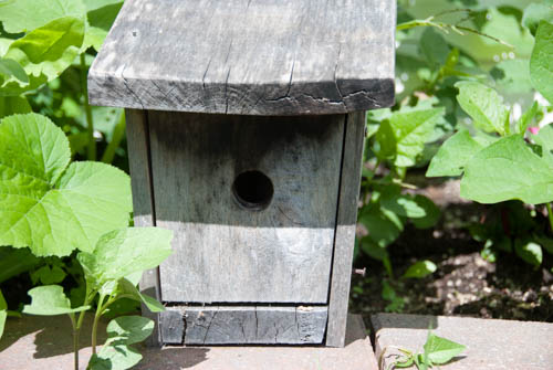 Nature Study: investigating a bird house | Learning Mama