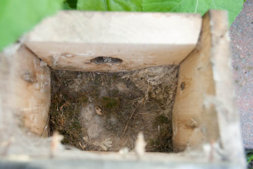 Nature Study: Investigating the inside of a bird house | Learning Mama