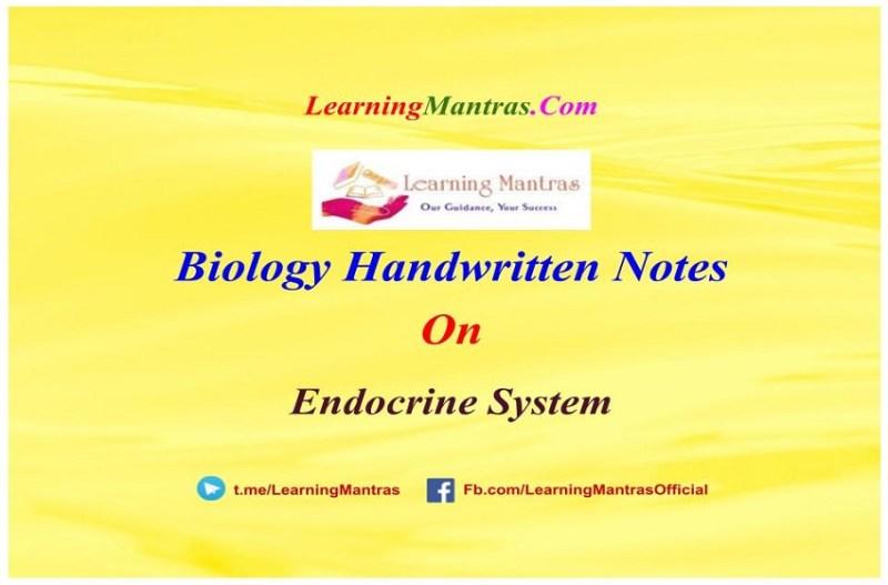 Endocrine System Handwritten Notes PDF