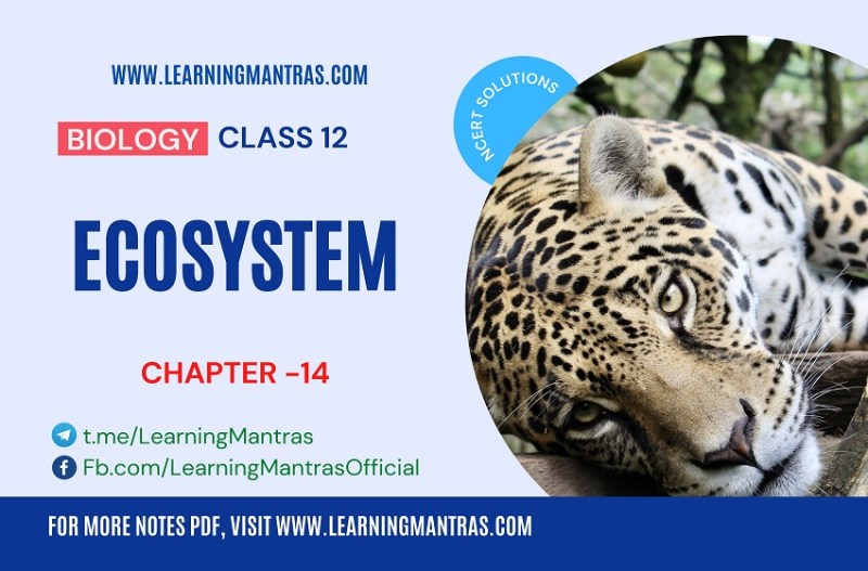 NCERT Solutions for Ecosystem