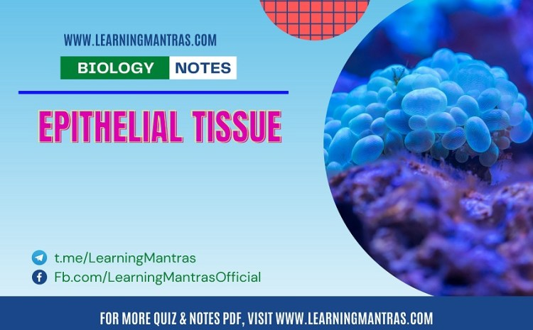 Biology MCQ on Epithelial Tissue for NEET and Medical Exam 2021
