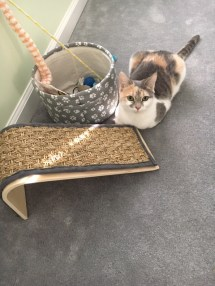 Lily, right after sharpening her claws on the carpet in front of her scratcher.