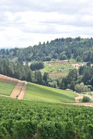 View at Winderlea Vineyard