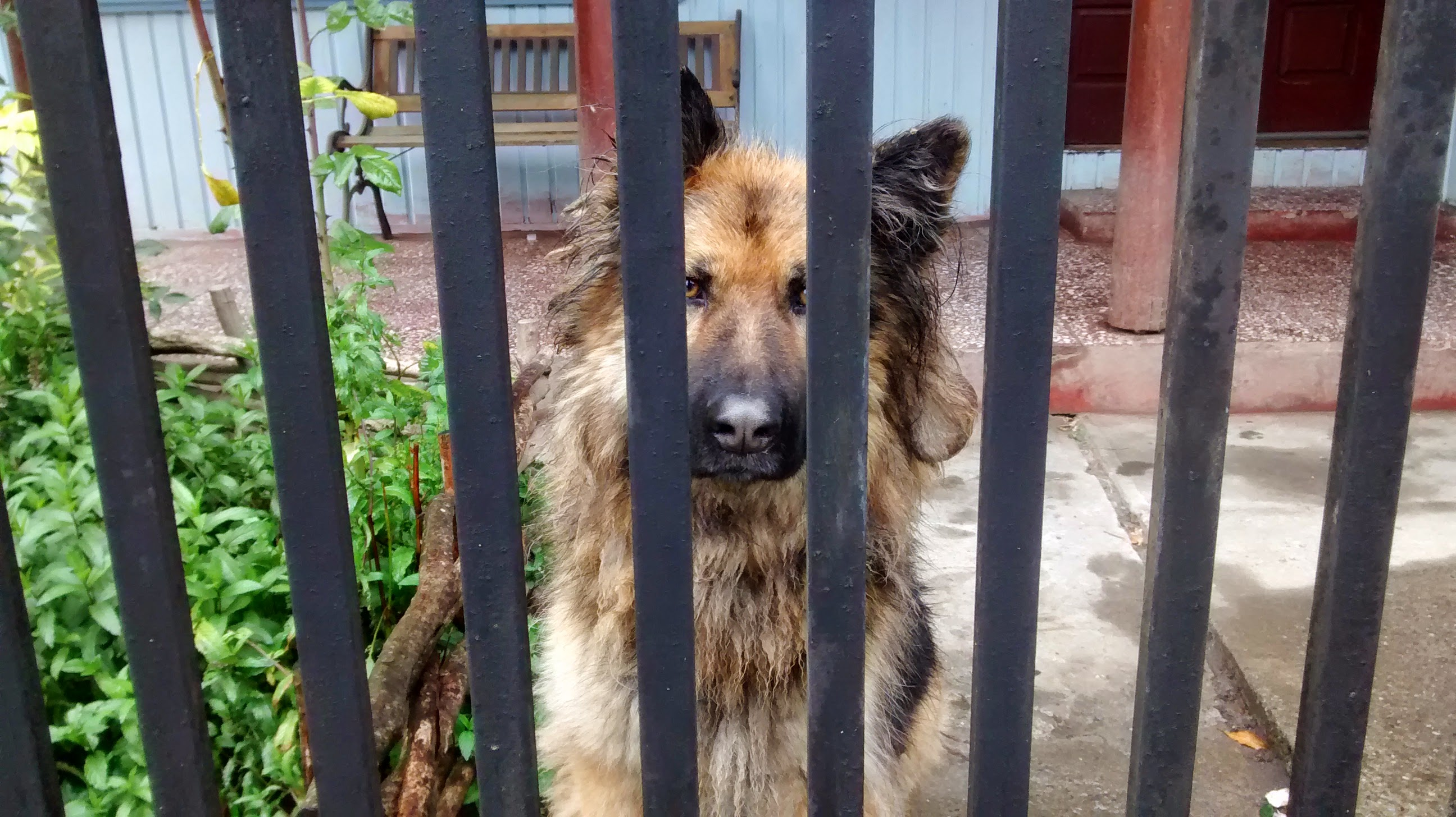 Read more about the article What Feral Dogs Can Teach Us About Humanity