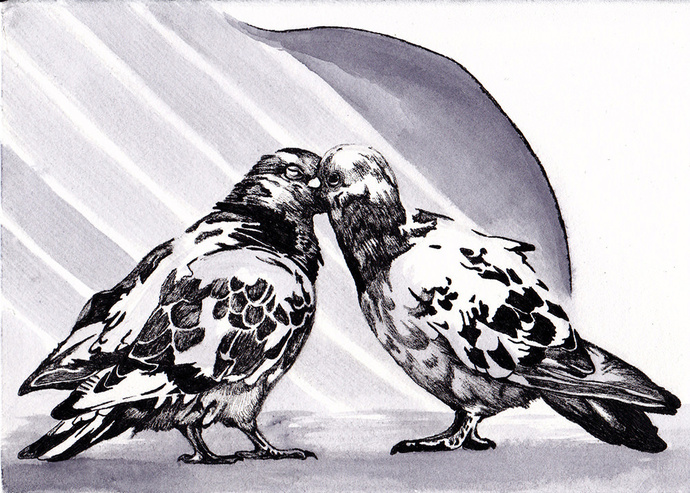 A Welcome Interruption - two pigeons - ink drawing