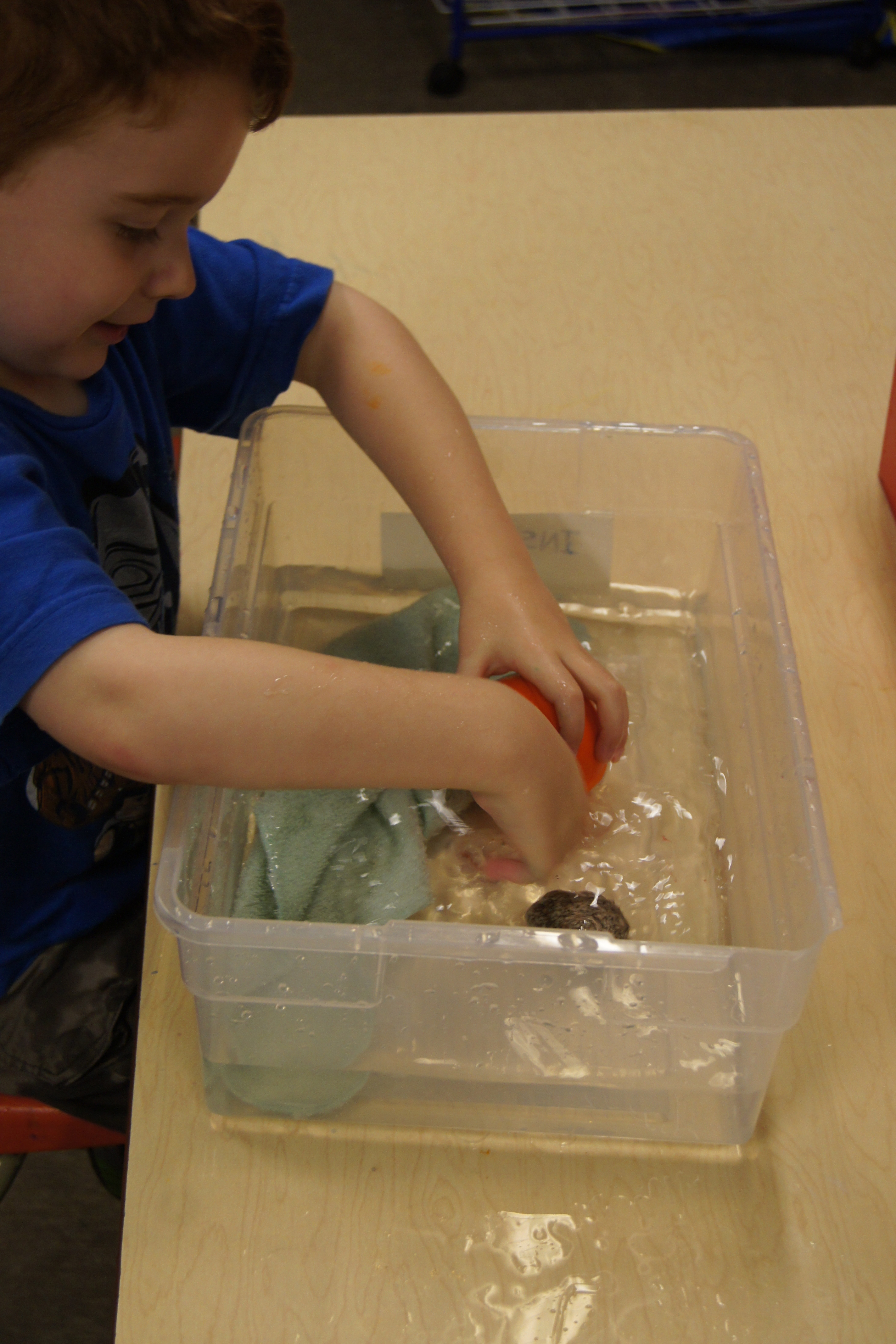 Discovering Absorption With Preschoolers