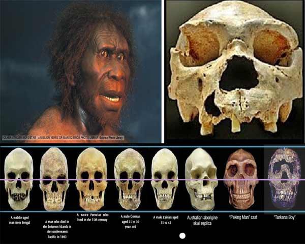 Sejarah manusia purba dan jenis jenis manusia purba