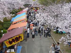 Sakura 2016 Osaka -Cherry blossom 15