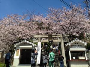 Sakura 2016 Kobe 7