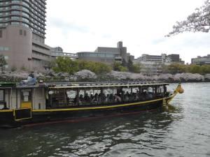 Sakura 2016 Osaka -Cherry blossom 3