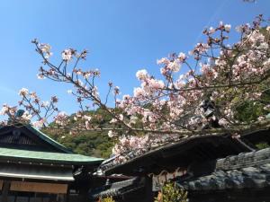 Sakura 2016 Kobe 2