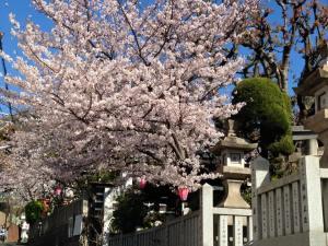 Sakura 2016 Kobe 1