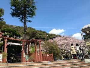 Sakura 2016 Kobe 8