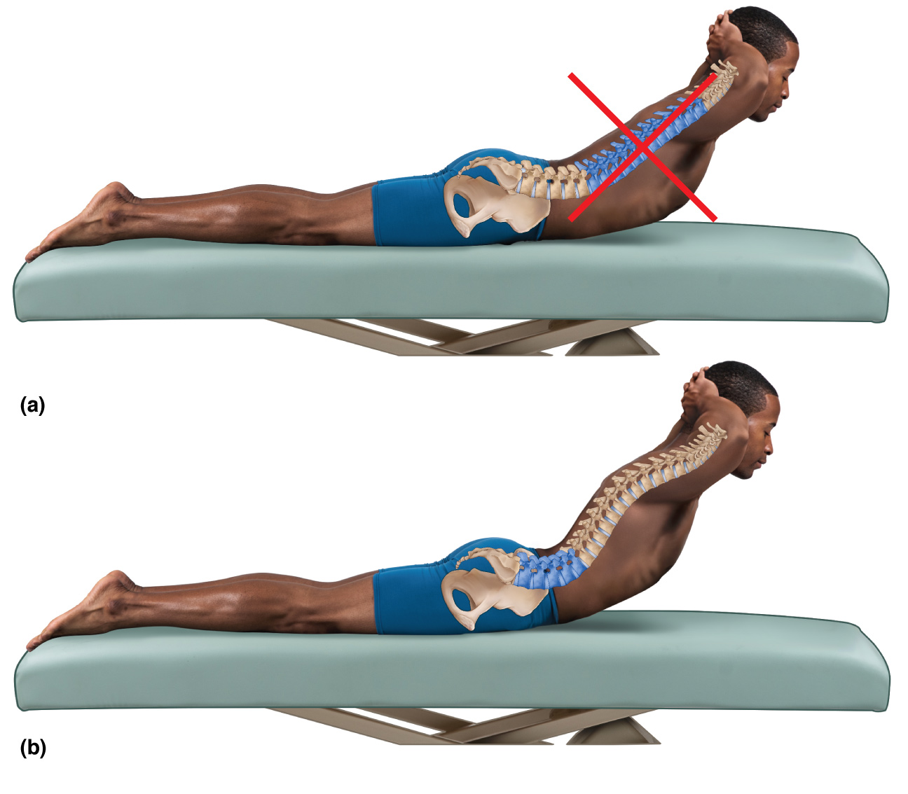 Stretching and Strengthening the Spinal Curves
