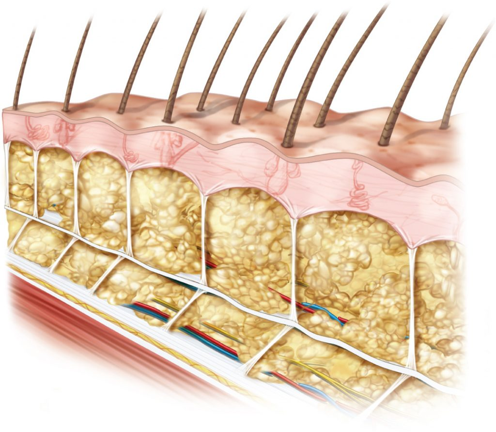 The Frictionless Skin Fascia Interface With Underlying