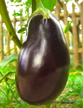 Recipes for Spanish eggplant