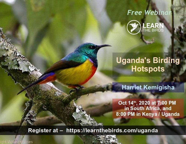 Uganda birding hotsport thumbnail