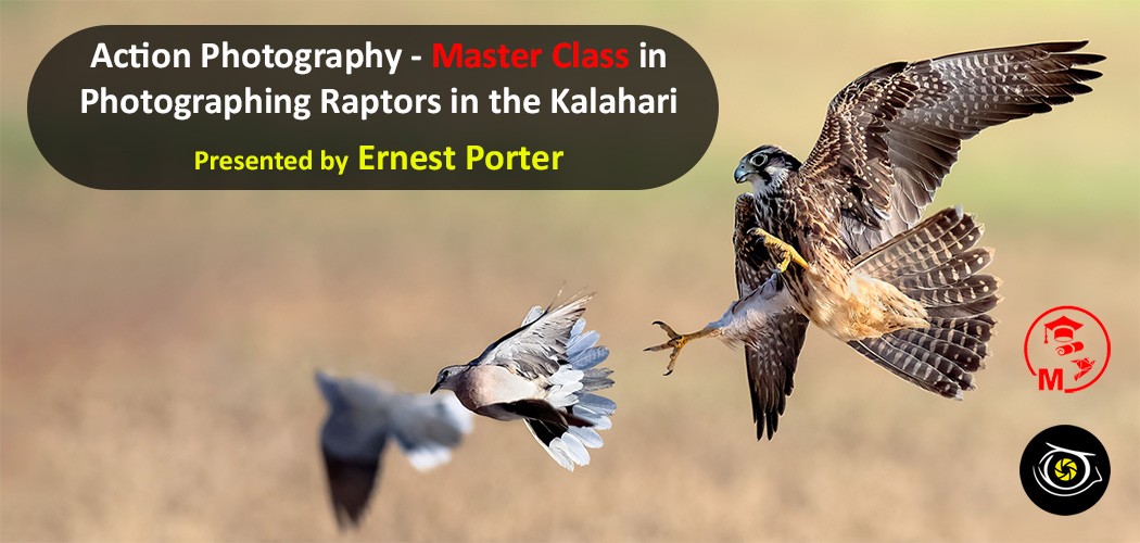 Banner of raptor catching dove