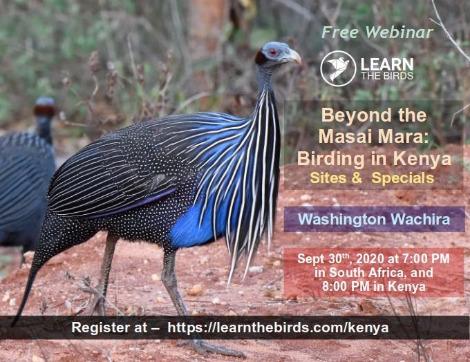 Kenyan birding webinar thumb