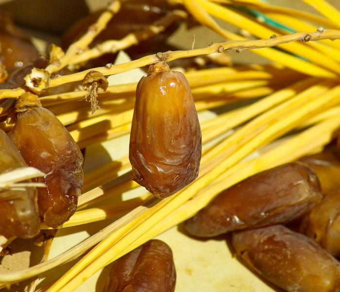 Dried Dates on Religion and Science