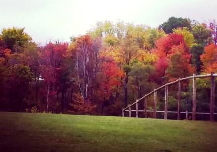 changing leaves in the Laurel Highlands