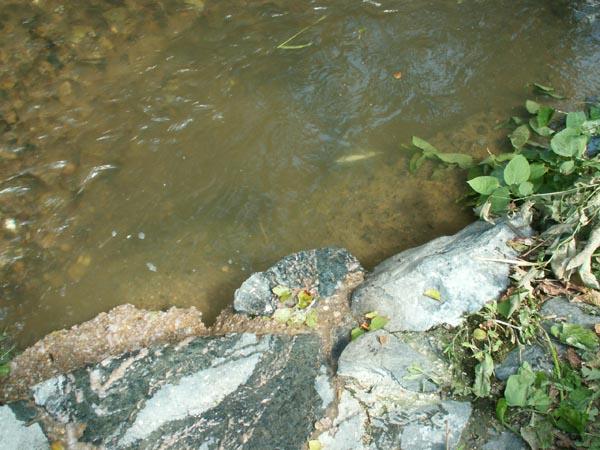 Hl (6) : poissons morts de la pollution (1/4)
