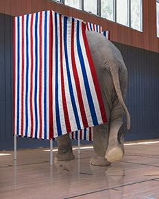 Voting Elephant