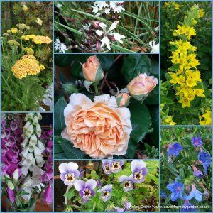 Dovewood Garden Photo Challenge Week 9