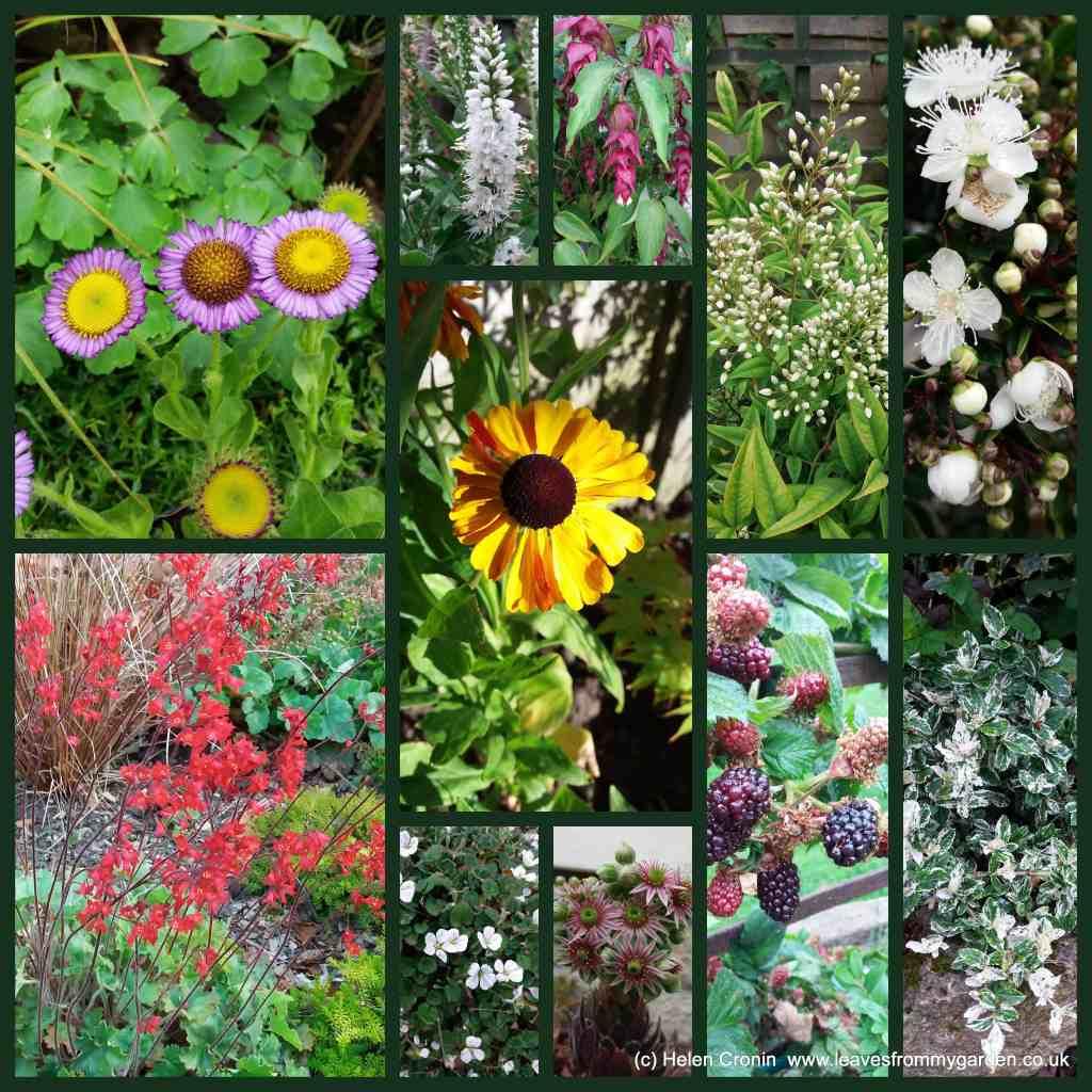Dovewood Garden Photo Challenge week 12