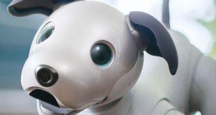 Sempat Dihentikan, Kini Robot Anjing Aibo Dirilis Kembali