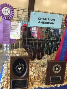 Grand Champion of the Show