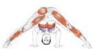 Yoga Anatomie kleine Abbildung