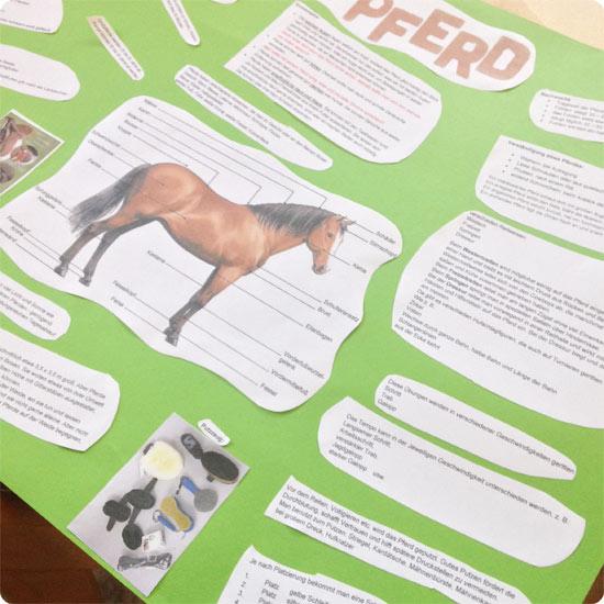 7 Tage - 7 Bilder | KW#16 | Referat 4. Klasse über Pferde