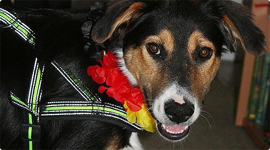 Jahresrückblick - Juli 2014 - Weltmeisterschaft - Hund