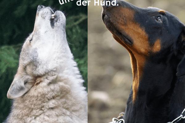 Der Wolf und der Hund.