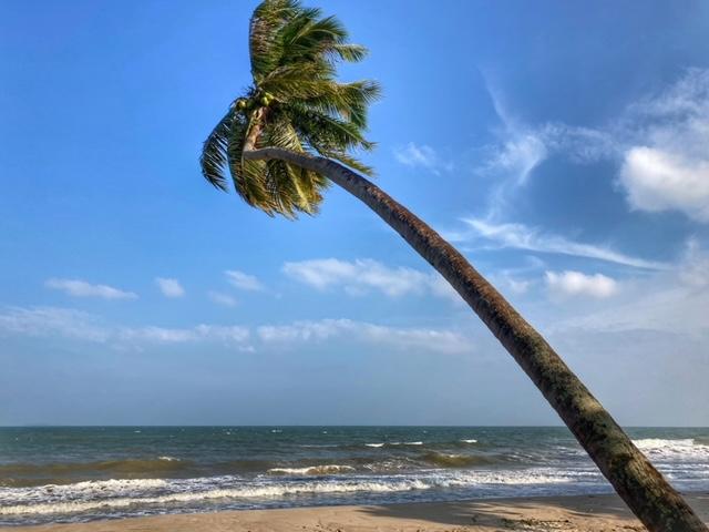 Kokospalme Meer und Wind Chumphon Thailand