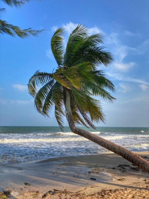 Strand und Kokosbaum Chumphon Thailand
