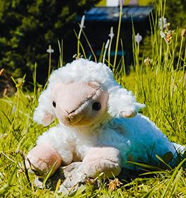 Lebenskissen - Zirbenkissen Plüschtier Kinder Schaf