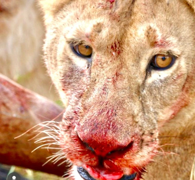 Tansania - Serengeti - Ostafrika - Safari
