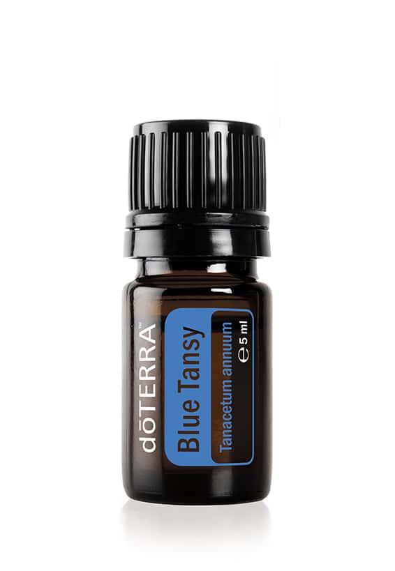 Blauer Rainfarn – Tanacetum annuum – Blue Tansy